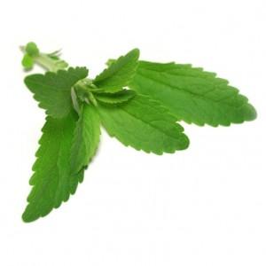 Stevia - suhkruleht