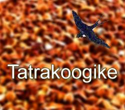 Tatrakoogike - retsept