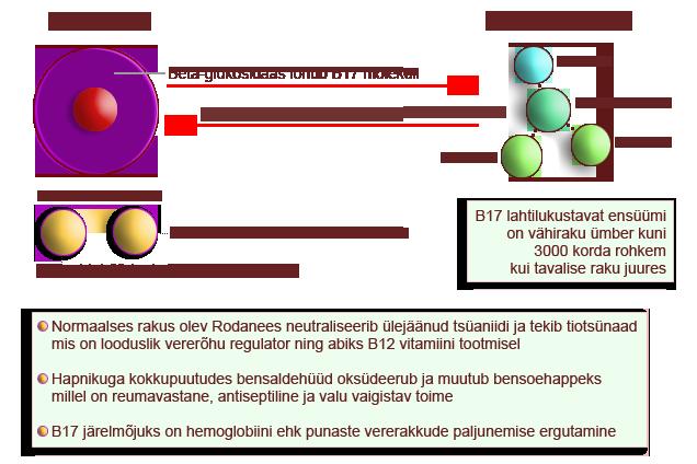 Amügdaliin - kuidas toimib