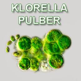 Klorella - chlorella
