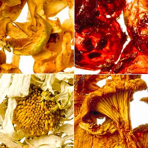 Koolitus: õunte, marjade ,seente, ravimtaimede kuivatamine
